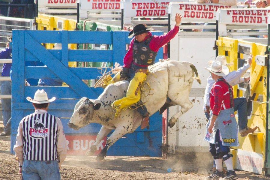 Head Down to the Round-Up