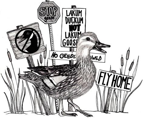 """Resident ducks rally against """"Lakum Gooseum"""""""