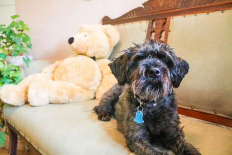 Louie Provides Comfort for Students at Counseling Center