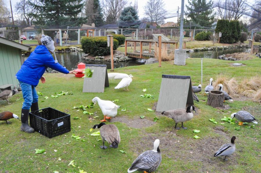 Supporters Remain Determined to Keep Aviary Open