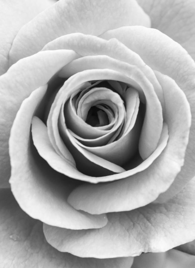 Roses+Aren%27t+Red