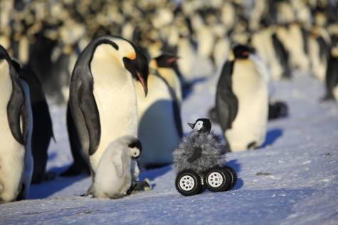 Robot Penguin Rover