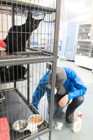 Volunteer at the Blue Mountain Humane Society scrubs the floor as a kitten looks on quizzically.