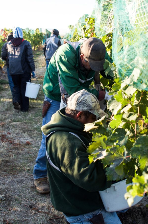 Here's to the vineyard workers of the Walla Walla Valley