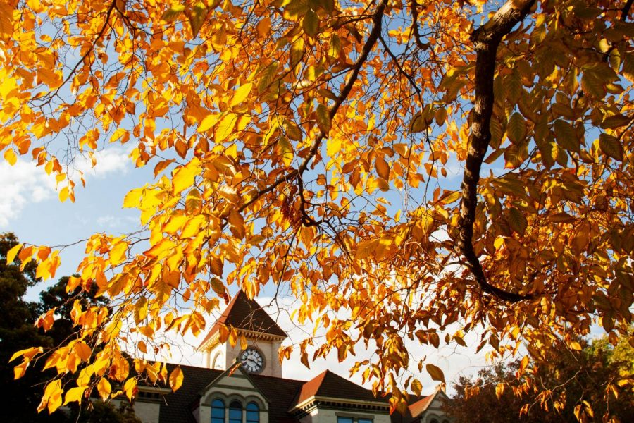 Whitman%E2%80%99s+campus+is+known+for+it+s+many+beautiful+trees+and+a+1%3A1+ratio+of+students+to+trees.+Photos+by+Chelsea+Goldsmith
