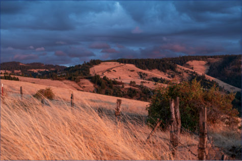 The foothills of the Blue Mountains.